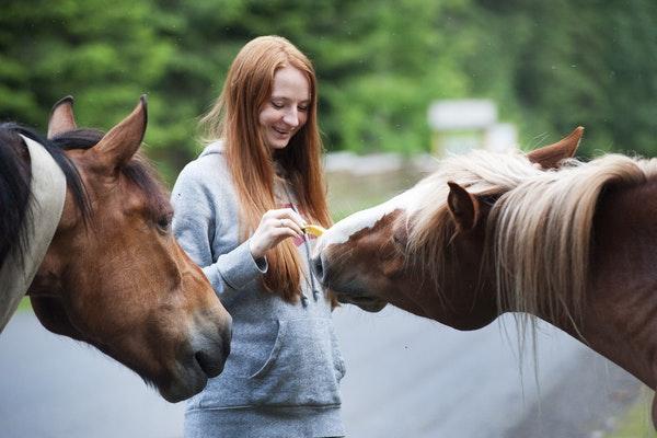 http://www.wkdis.de/aktuelles/images/aktuelles-equus.jpg