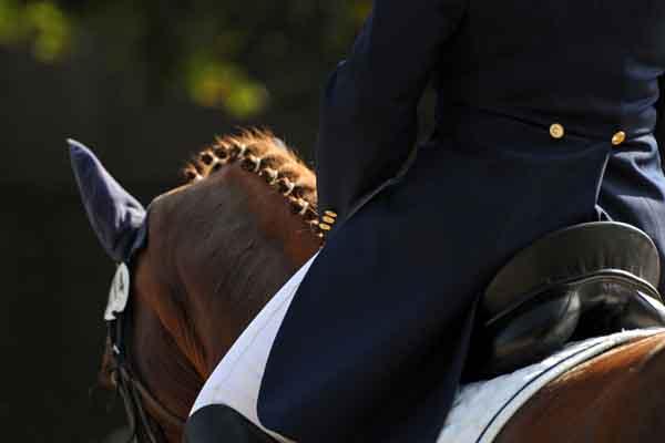 http://www.wkdis.de/aktuelles/images/aktuelles-pferd_auktion.jpg